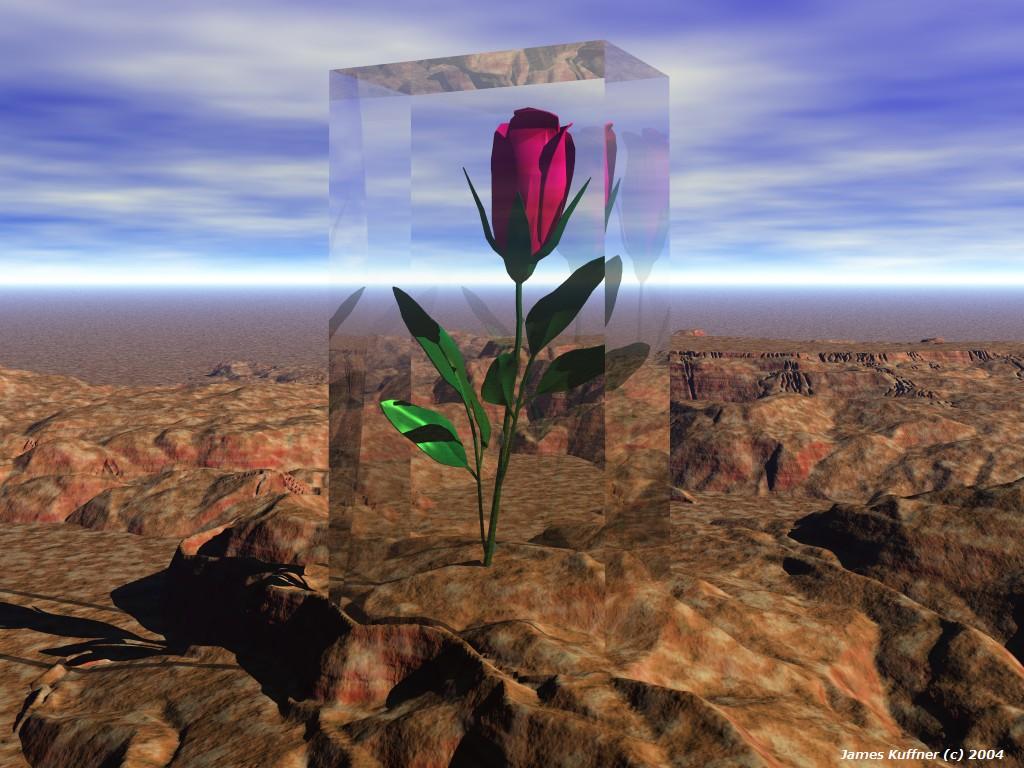 گل جاودانه